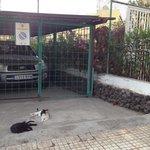 Katzenfütterung an der Anlage