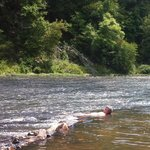 Laying in the Flynt River at Sprewell Bluff