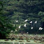 Birds flying over water body