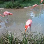 View of the flamingos