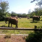 Just one of the views for the elephants