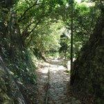 垣花樋川に至る森の小道。トトロいそう。