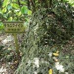 かつてここを訪れる人がナカユクイ(中休み)したと言う石。