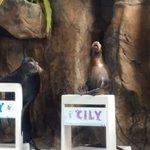 Show de focas adorables :)
