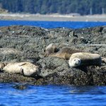 Some of the wildlife we saw-seals!