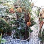 La cour intérieure, le jardin d'Eden