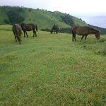 野生の馬たちです!