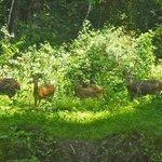 Deer at the top Slip