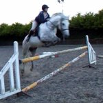 Jumping at the paddocks