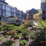 gardens and koi carp ponds