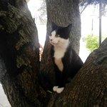 El gatito de la casa