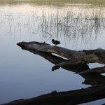 Umgebung: Laacher See