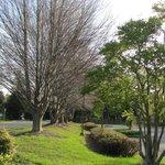 Meadowlark Botanical Gardens - entry drive, beech trees 4-2014