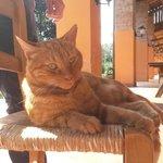 il dolcissimo micio Rossano, capace di farsi amare anche da chi, come me, non ama i gatti :-)