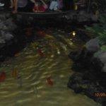 los peces en recepcion