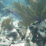Pentax underwater camera