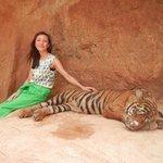 タイガー動物園
