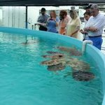 Feeding the Turtles green peppers