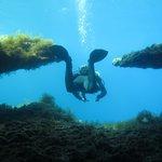 Mergulho em Comino