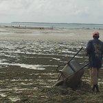 staff rimuove alghe
