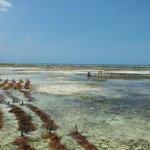 piantagione alghe