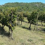 Vineyards and the Alpilles