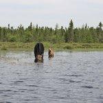 Moose Tours on Water