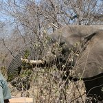 CJ and the elephant that visited our camp!
