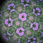 view of the flowers through a kaleidscope