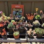 Succulents in the garden!