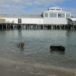 Devonport wharf