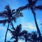 Beautiful Palms!