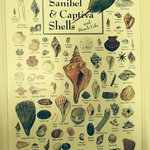 Shell identification chart on the wall