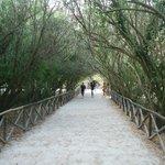 Il sentiero che conduce alla latomia.