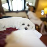 Pet friendly hotel (here is a proof)