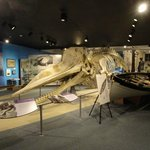 Whale skeleton and boat