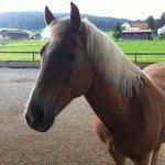 Das Haus Pferd und unsere Aussicht