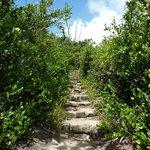 Path over the island