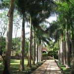 L'allée d'entrée bordée de palmiers