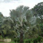 やはり南国の植物は違うと思いました。