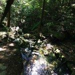 Nice streams