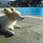 owners friendly dog chilling by the pool!!!