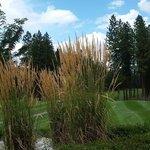 Christina Lake Golf Club Foto