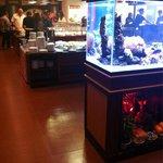 Un bel aquarium avec Nemo et dorine