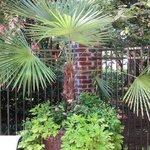 Nice foliage & planters around pool area