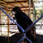 the Beuatiful Eagle