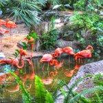 Fabulous Flamingos