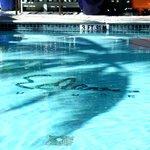 great salt pool