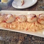 Scallops on Lobster Risotto