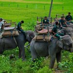 Elephants for ride